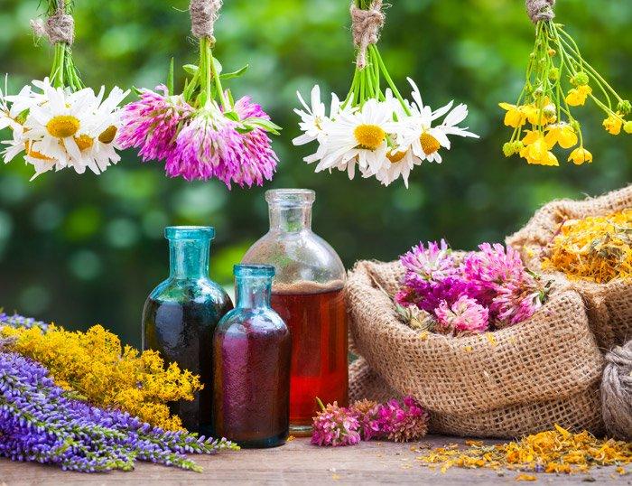 flores-bach-sencillez